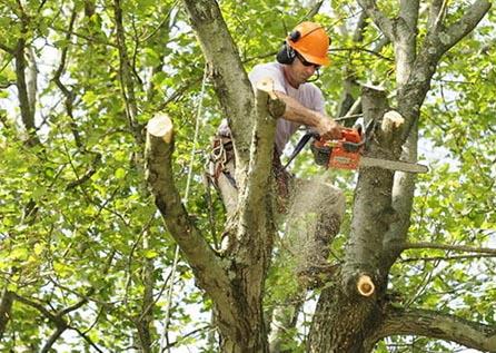 Санитарная обрезка дерева, кронирование