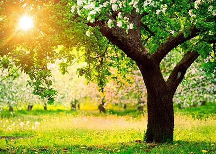 Лечение деревьев, каблинг, брейсинг