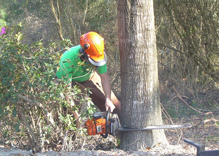 Удаление дерева целиком