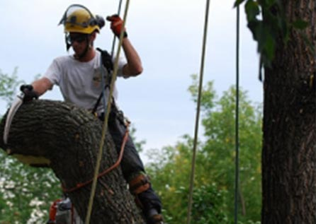 Удаление дерева по частям с завешиванием частей